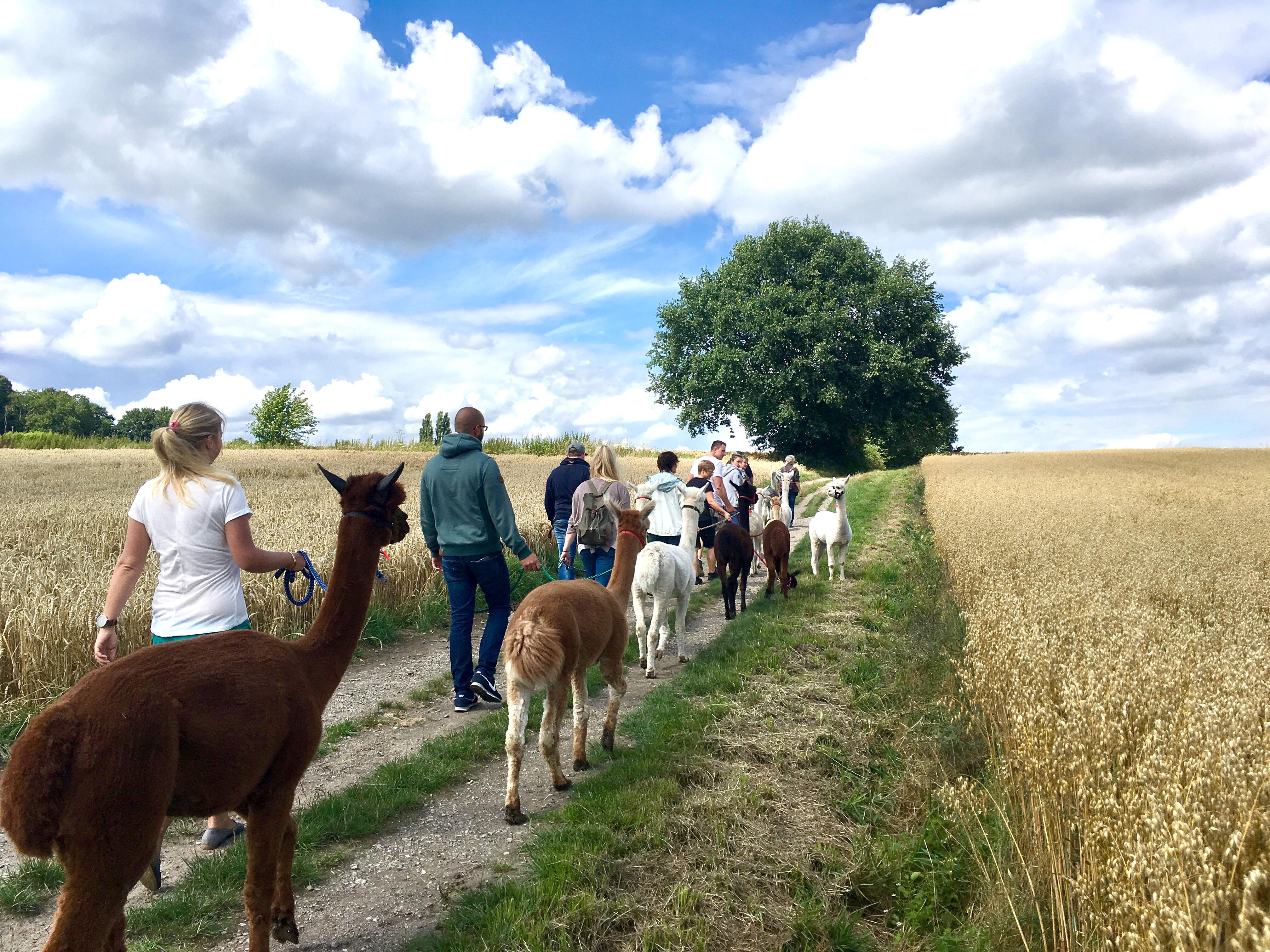 Alpaka Wanderungen in Nordrhein Westfalen