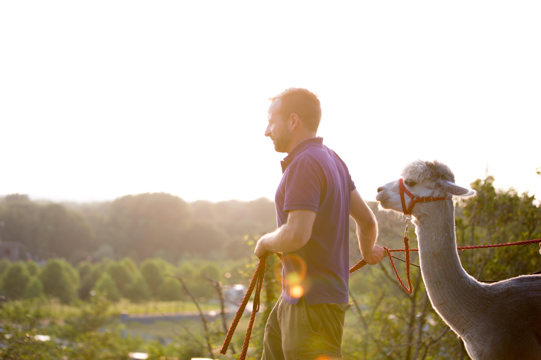 Daniel und seine Alpakas in Castrop-Rauxel