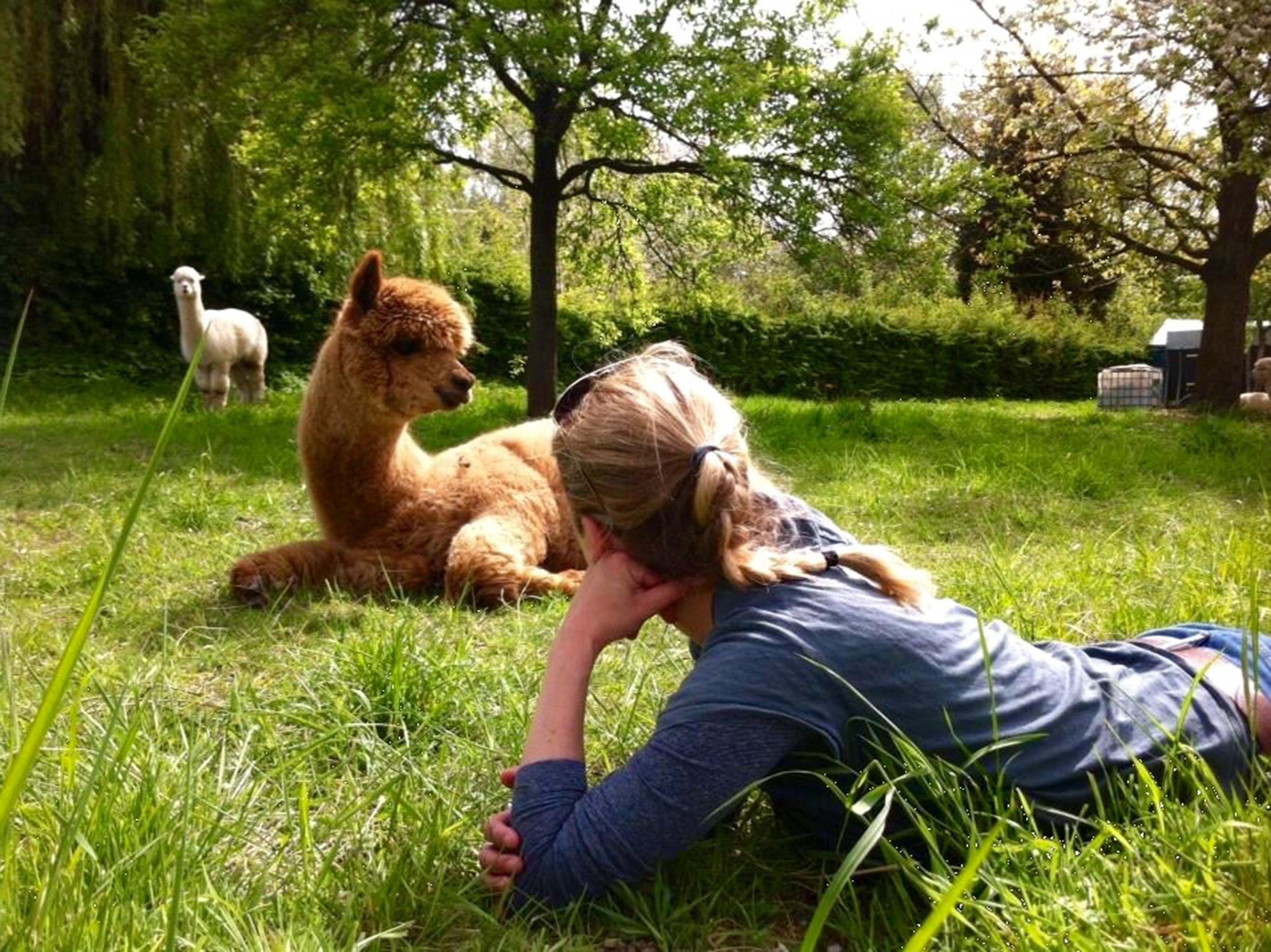 Entspannt mit Alpakas in NRW
